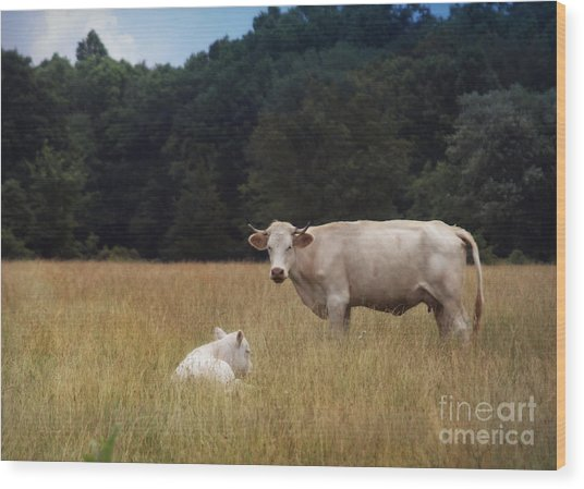 Ghost Cow And Calf Wood Print