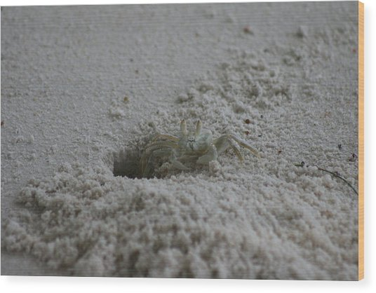 Wood Print featuring the photograph Ghost Crab by Debbie Cundy