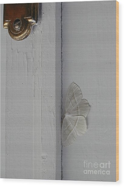 Ghost Doorbell Moth Wood Print