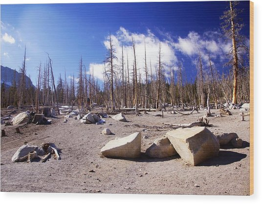 Ghost Forest 3 Wood Print by Michael Courtney
