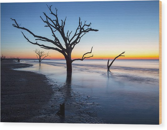 Ghost Trees Of Boneyard Beach 10 Wood Print