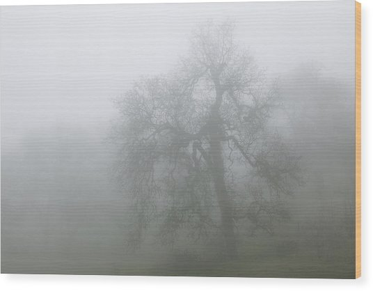 Ghostly Oak In Fog - Central California Wood Print