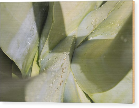 Giant Agave Abstract 3 Wood Print