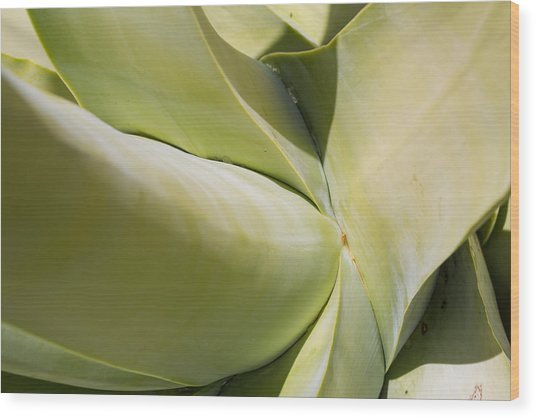 Giant Agave Abstract 9 Wood Print