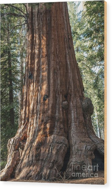 Giant Sequoia Wood Print
