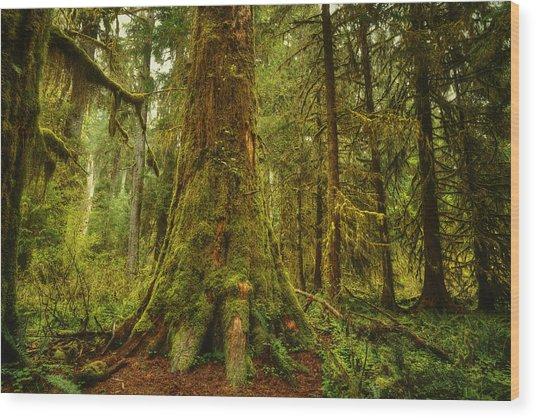 Giants Foot Wood Print by Stuart Deacon