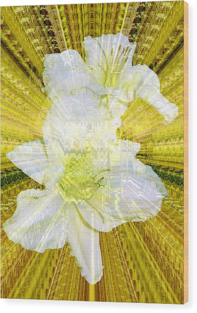 Gilding The Daylilies Wood Print by Susan Elizabeth Dalton