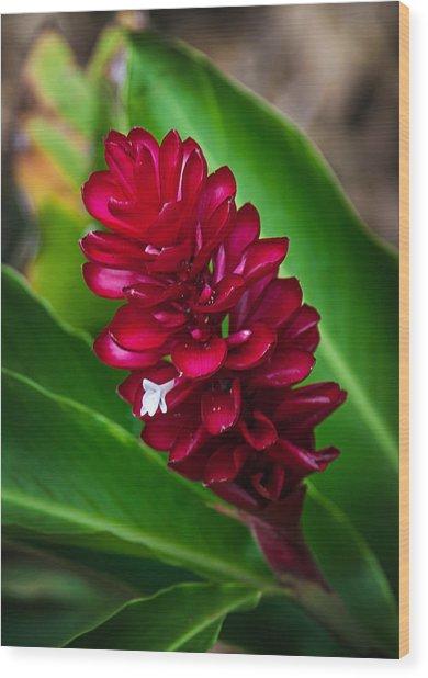 Ginger Flower Wood Print