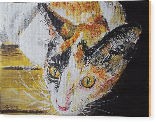 Ginger Stray Cat Wood Print