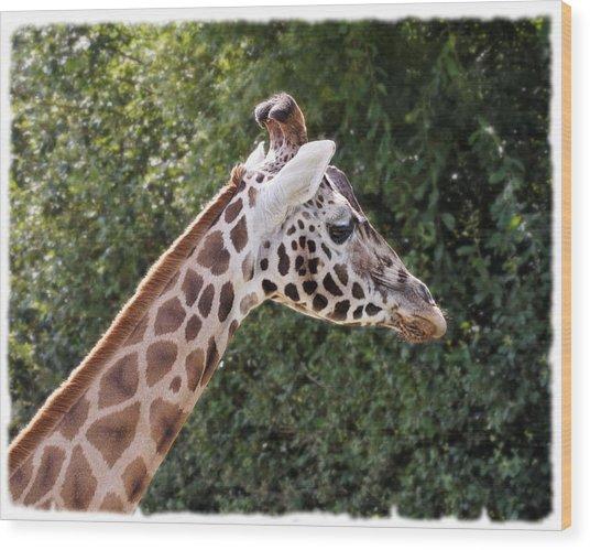 Giraffe 01 Wood Print