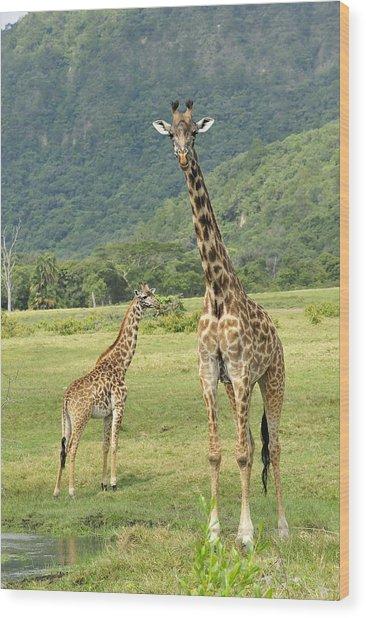 Giraffe Mother And Calftanzania Wood Print