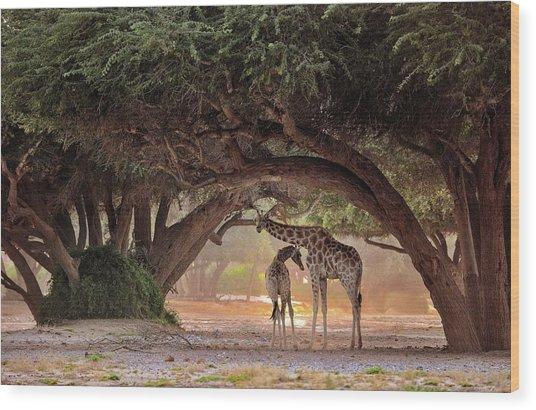 Giraffe - Namibia Wood Print by Giuseppe D\\\'amico