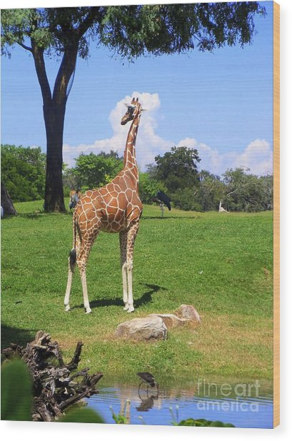 Giraffe On A Spring Day Wood Print