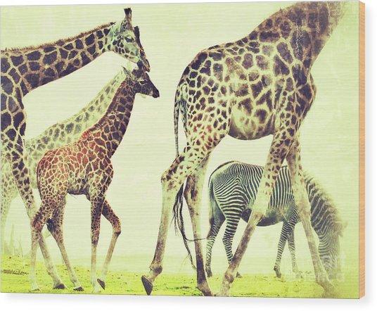Giraffes And A Zebra In The Mist Wood Print