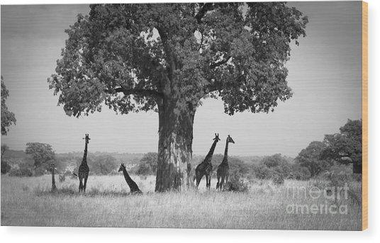 Giraffes And Baobab Tree Wood Print