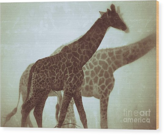 Giraffes In The Mist Wood Print