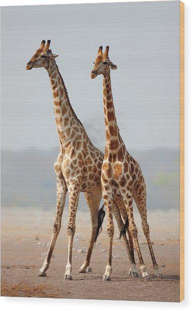 Giraffes Standing Together Wood Print