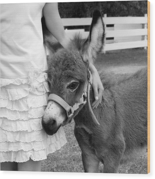 Girl And Baby Donkey Wood Print