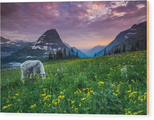 Glacier National Park 4 Wood Print by Larry Marshall
