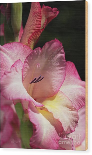 Gladiolus In Pink Wood Print