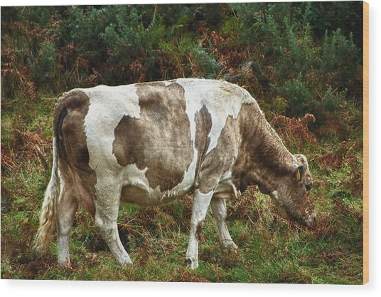 Glendalough Cattle 1 Wood Print