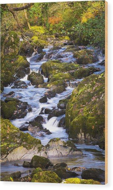 Glengarriff Woods In Autumn Wood Print