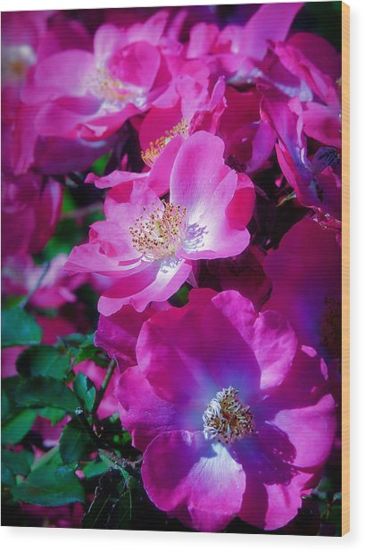 Glorious Blooms Wood Print