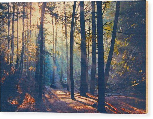 Glorious Forest Morning Wood Print