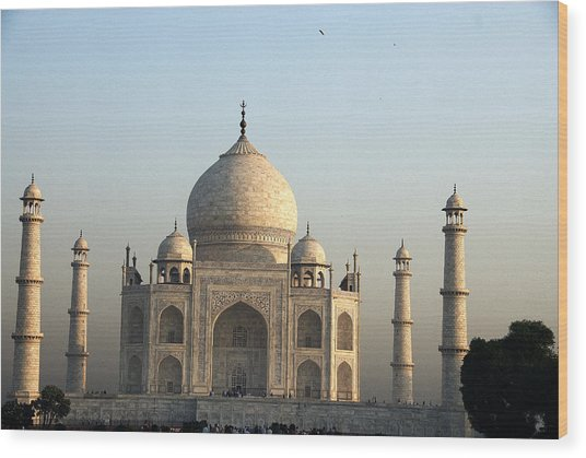 Glorious Taj Wood Print