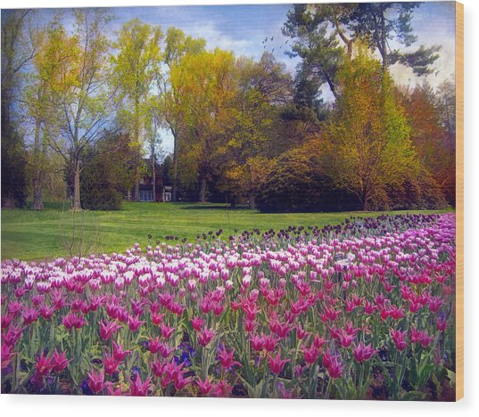 Glory Of Tulips Wood Print