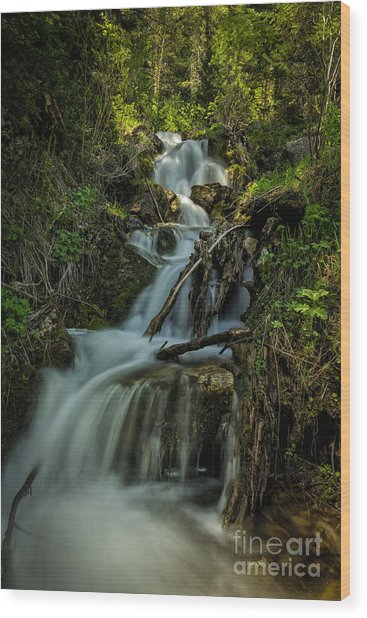Glow At The Top Wood Print by Mitch Johanson