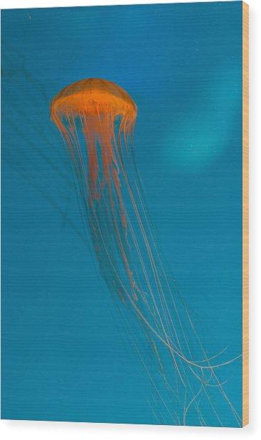 Glowing Orange Sea Nettle Wood Print