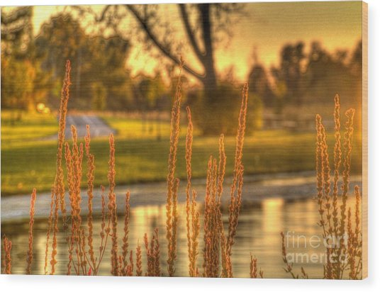 Glowing Plants In A Pond Wood Print