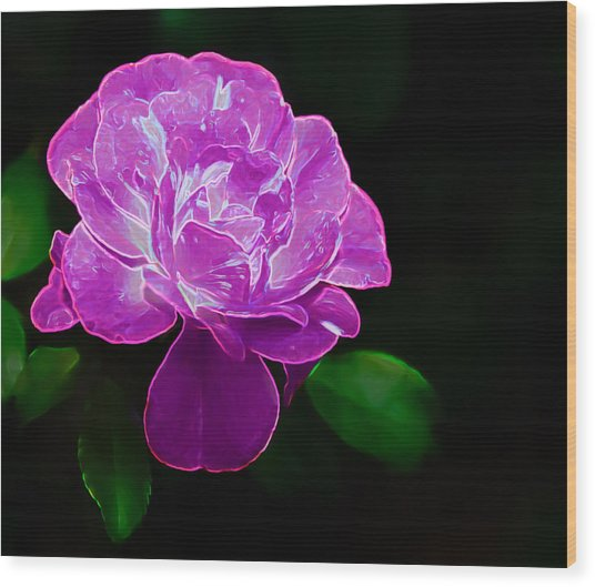 Glowing Rose II Wood Print