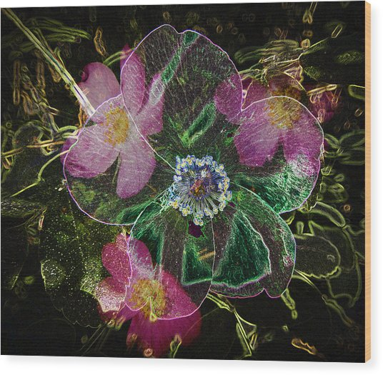 Glowing Wild Rose Wood Print