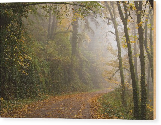 Go Ahead A Mystery Awaits Wood Print