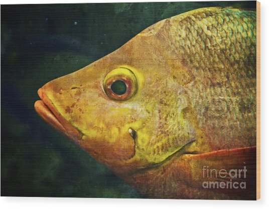 Go Fish Wood Print by Pam Vick