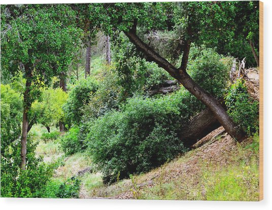 Go Hike Wood Print