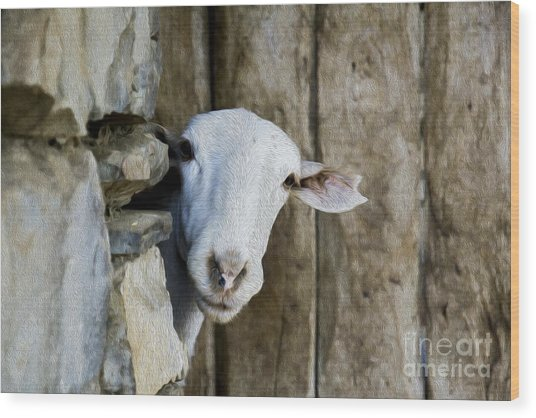 Goat Looking Oleo Wood Print
