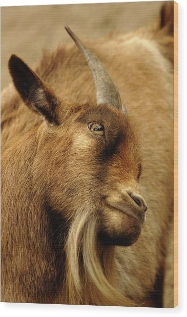 Goat Wood Print by Maria Mosolova/science Photo Library