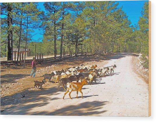 Goats Cross The Road With Tarahumara Boy As Goatherd-chihuahua Wood Print