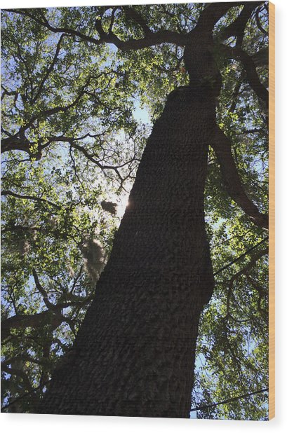 Goddess Tree Wood Print