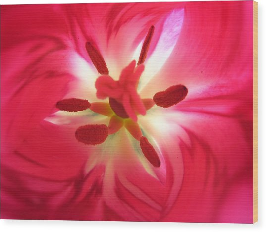 God's Floral Canvas 2 Wood Print