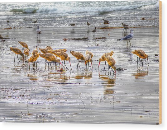 Godwits At San Elijo Beach Wood Print