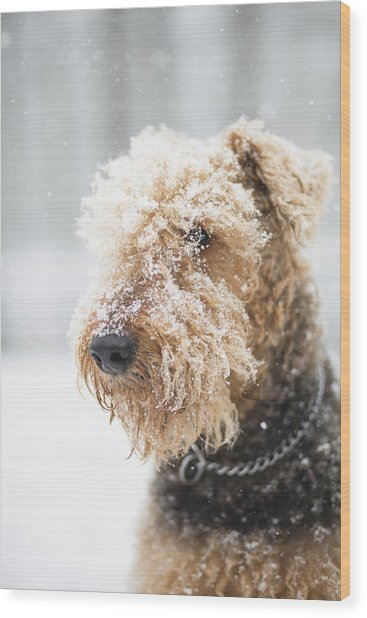 Dog's Portrait Under The Snow Wood Print