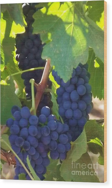 Golan Grapes Wood Print