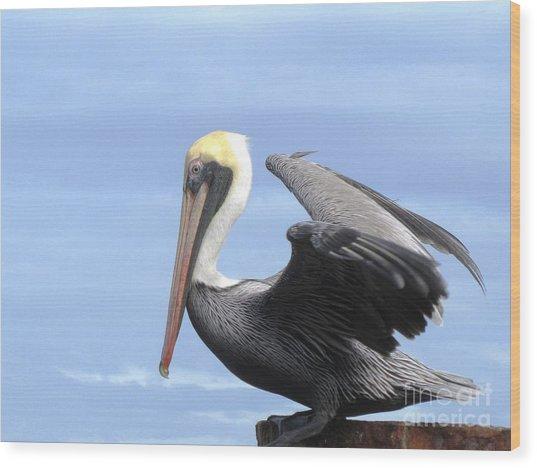Gold Crown Pelican Wood Print