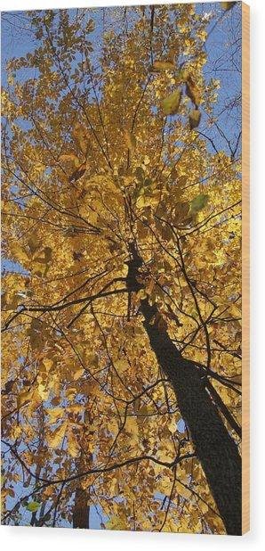 Gold Wood Print by Doug Hubbard