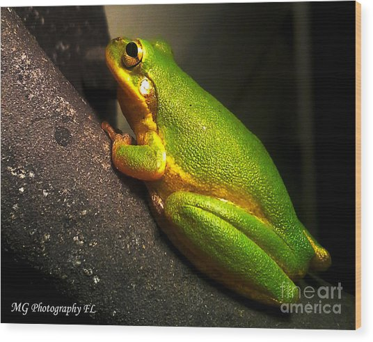 Wood Print featuring the photograph Gold Flake Frog by Marty Gayler
