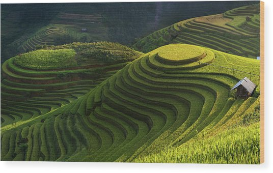 Gold Rice Terrace In Mu Cang Chai,vietnam. Wood Print